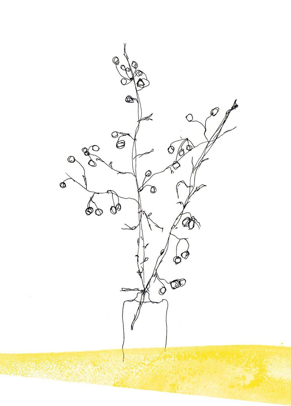 Botanical - image 4 - student project
