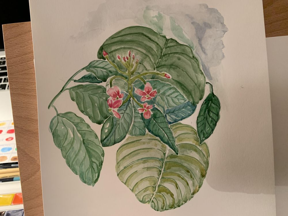 Some tropical flowers :D - image 1 - student project