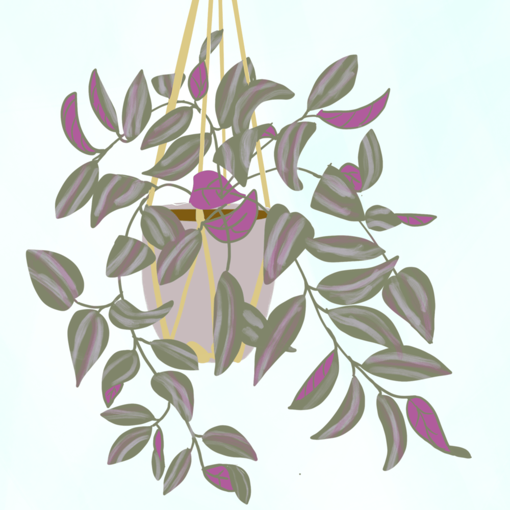 Illustrated Plants in Procreate - image 2 - student project