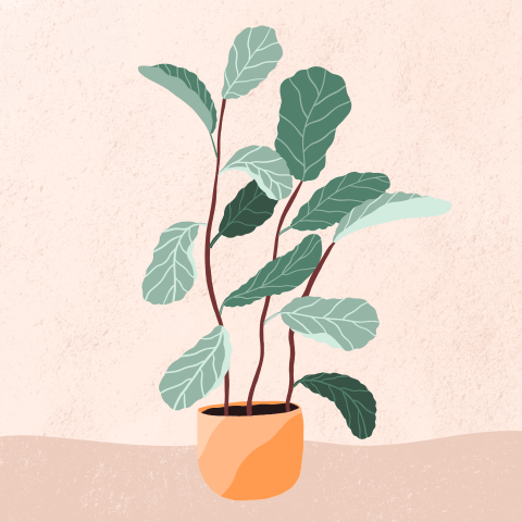 Plant Illustrations - image 3 - student project