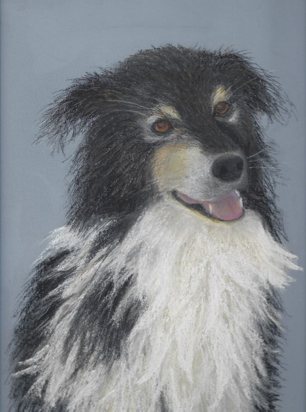 Border Collie - image 1 - student project