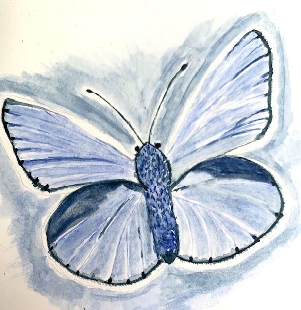 Water Color Butterfly - first attempt. - image 2 - student project