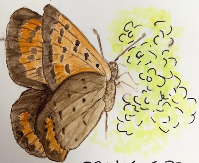 Water Color Butterfly - first attempt. - image 1 - student project