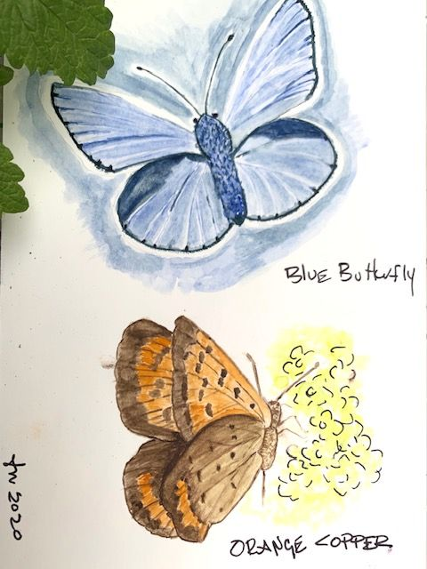Water Color Butterfly - first attempt. - image 3 - student project