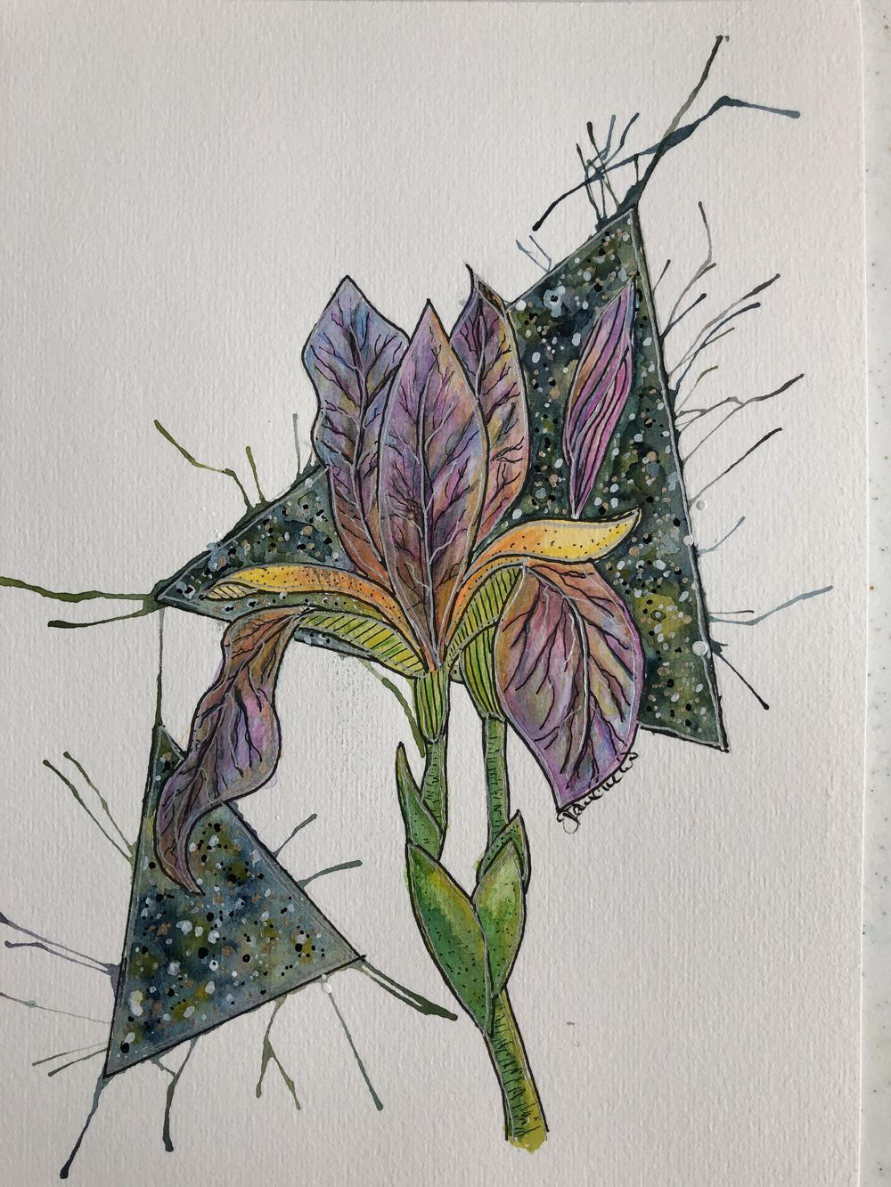 Watercolor Iris - image 1 - student project