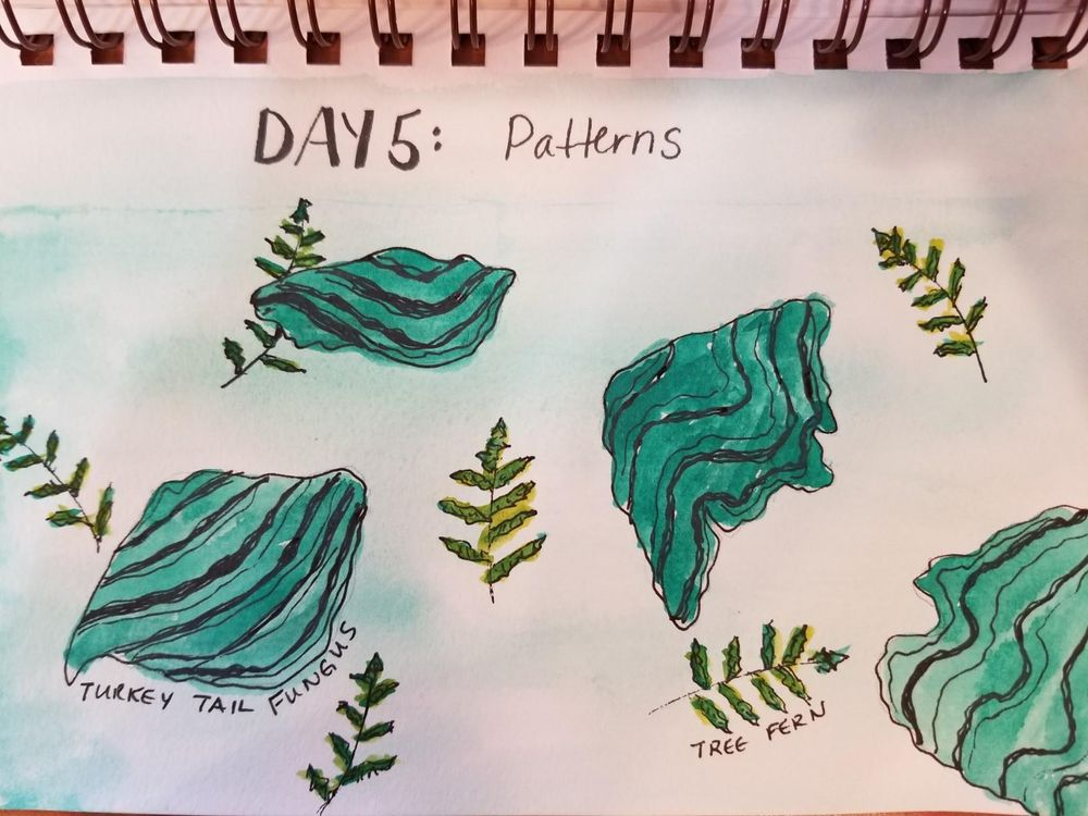 Nature Journaling Dream! - image 5 - student project