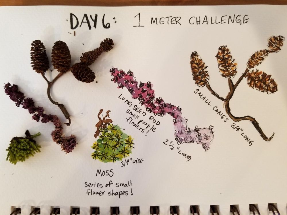 Nature Journaling Dream! - image 6 - student project