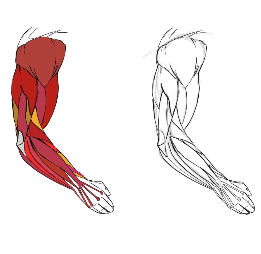 Arm Studies! - image 3 - student project