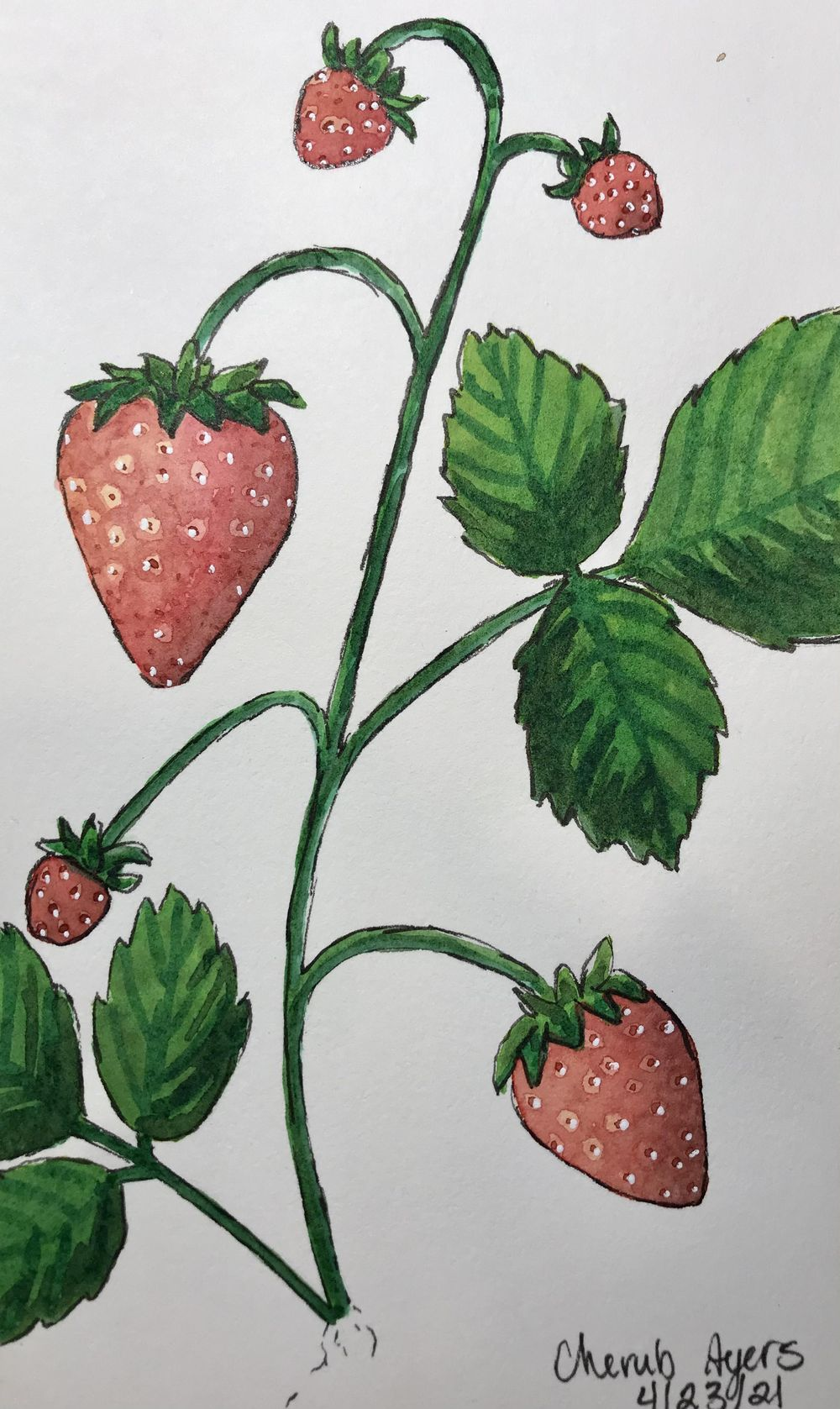 Strawberry Painting - image 1 - student project