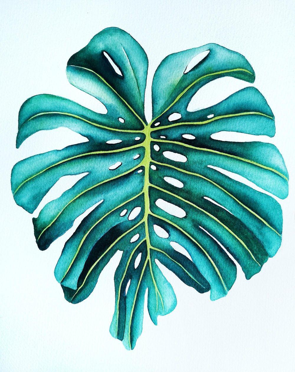 Botanical Illustration - Monstera Leaf - image 1 - student project