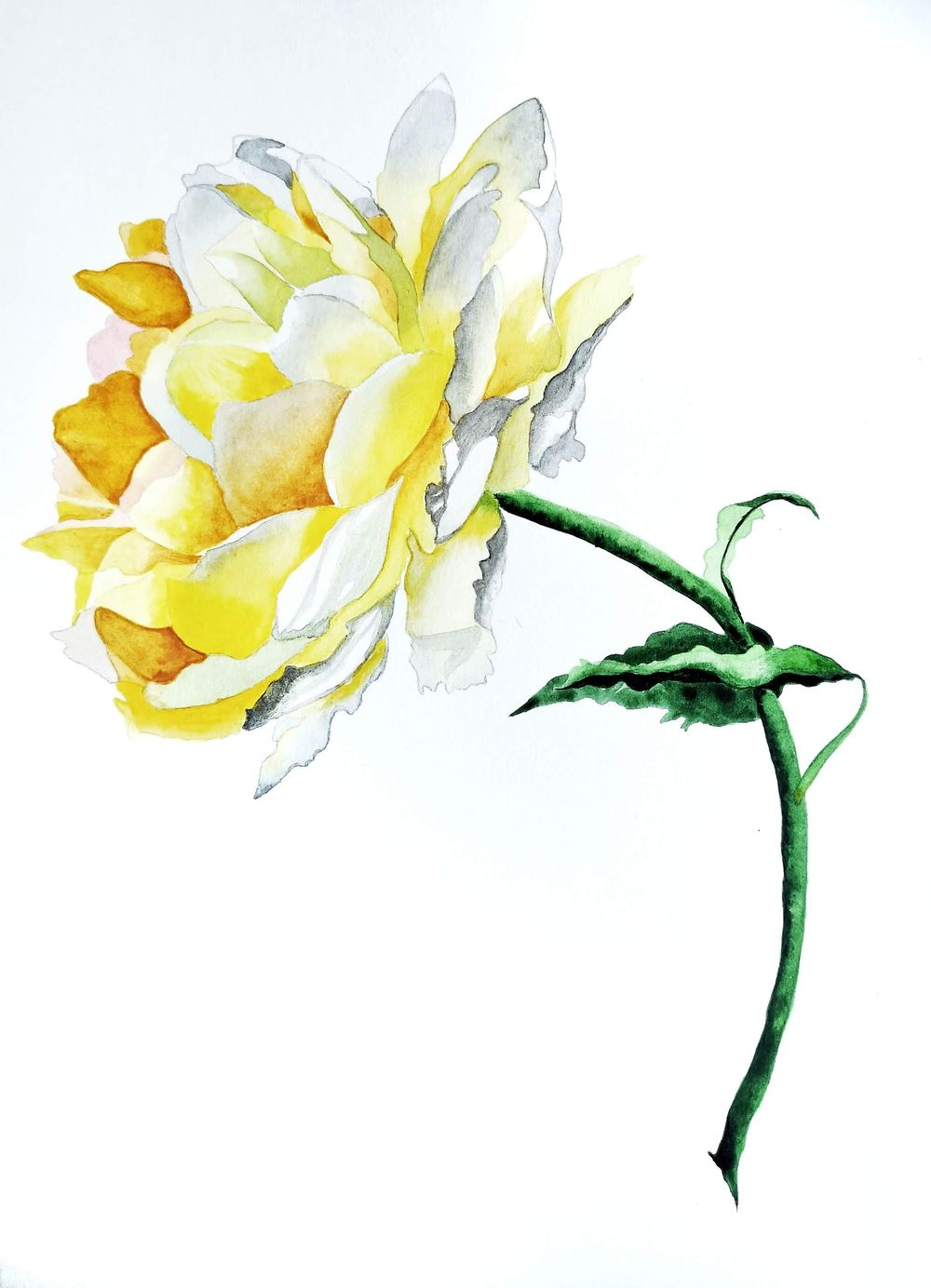 Watercolor Yellow Rose - image 1 - student project