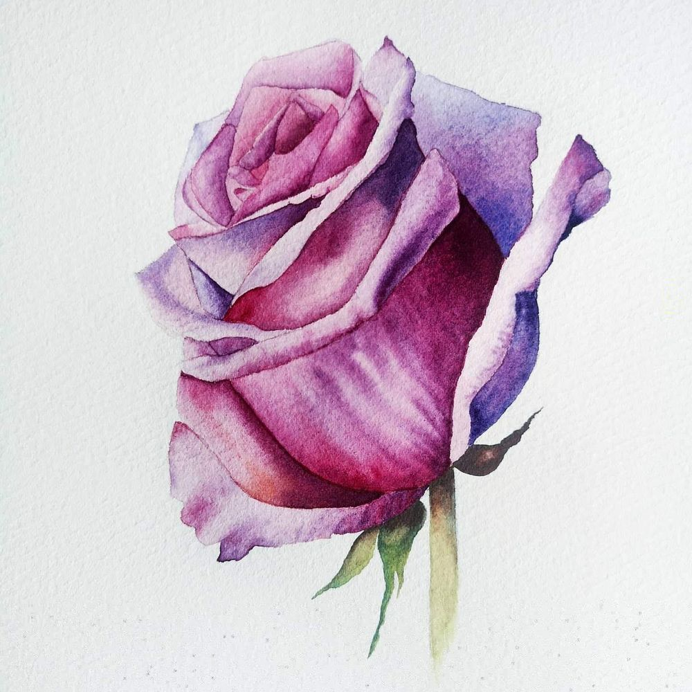 Watercolor Rose - image 2 - student project