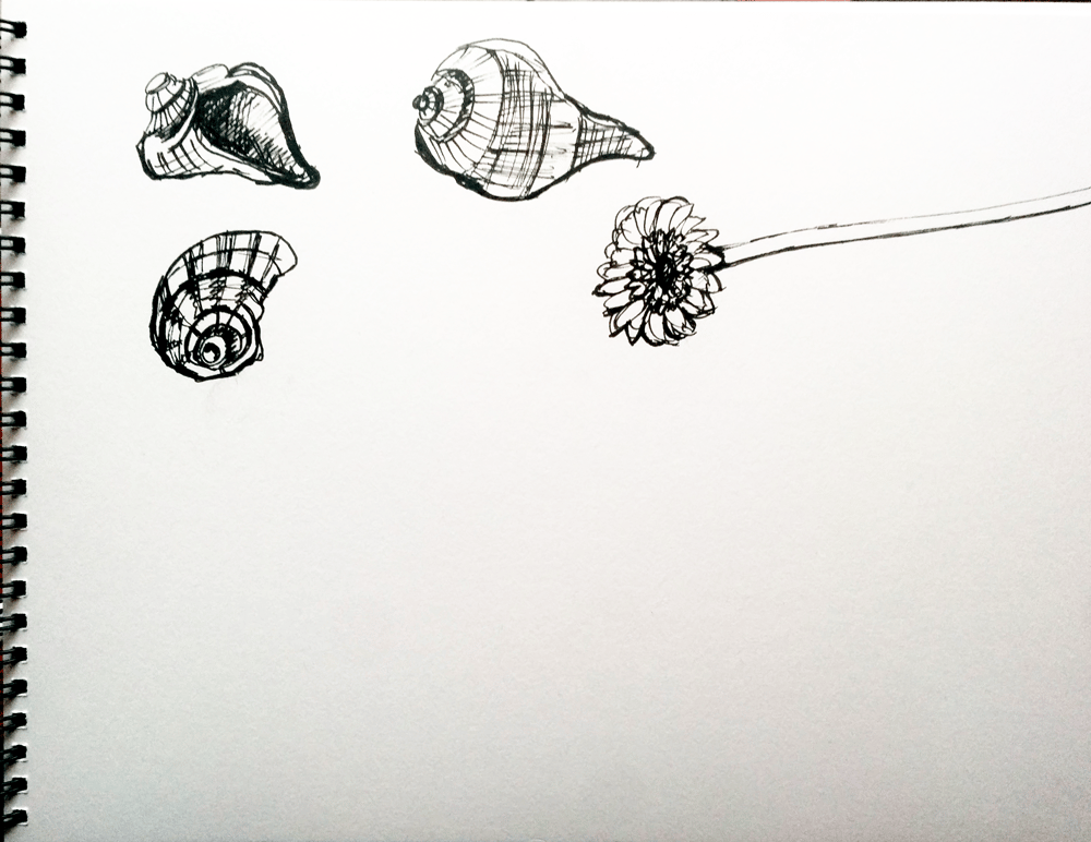 3 minutes sketches: the shell - image 1 - student project