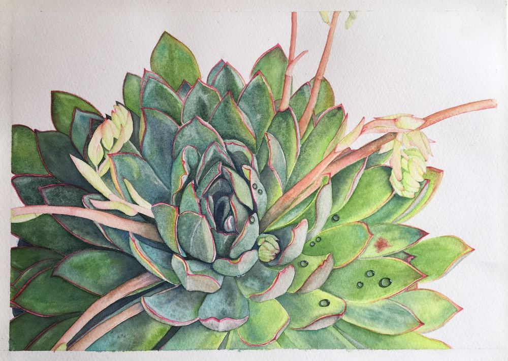 My Watercolor Succulent :) - image 1 - student project