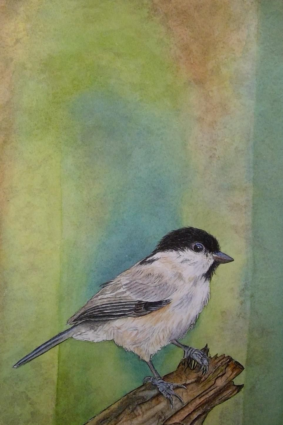 My Songbird - image 1 - student project