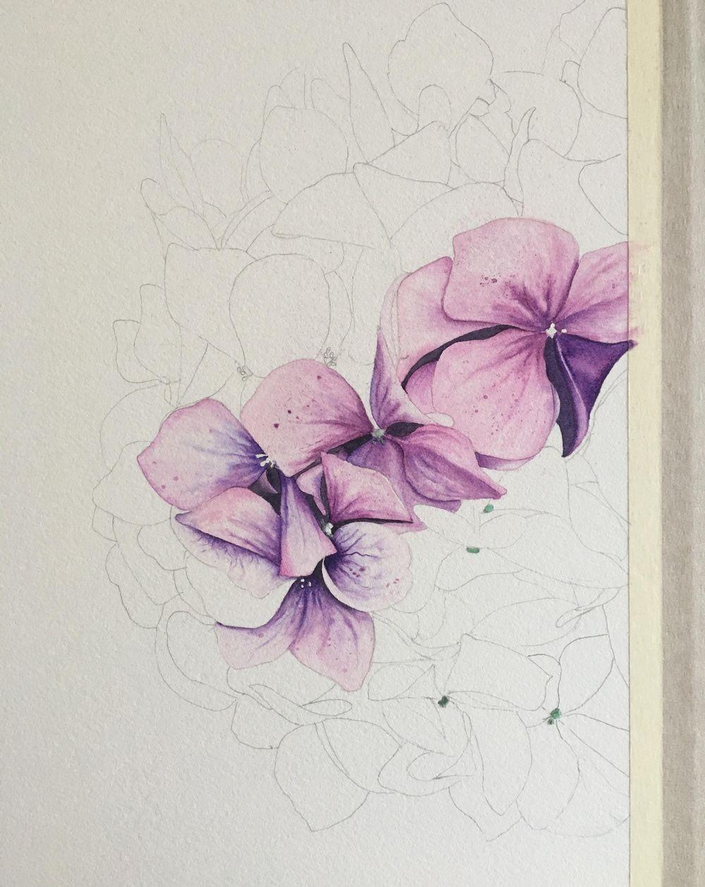 My Hydrangea - image 1 - student project