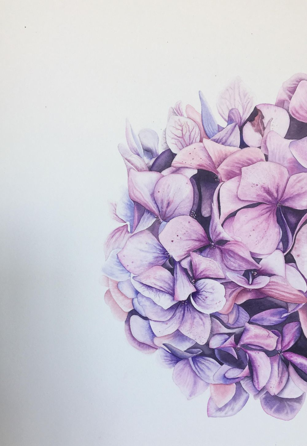 My Hydrangea - image 2 - student project