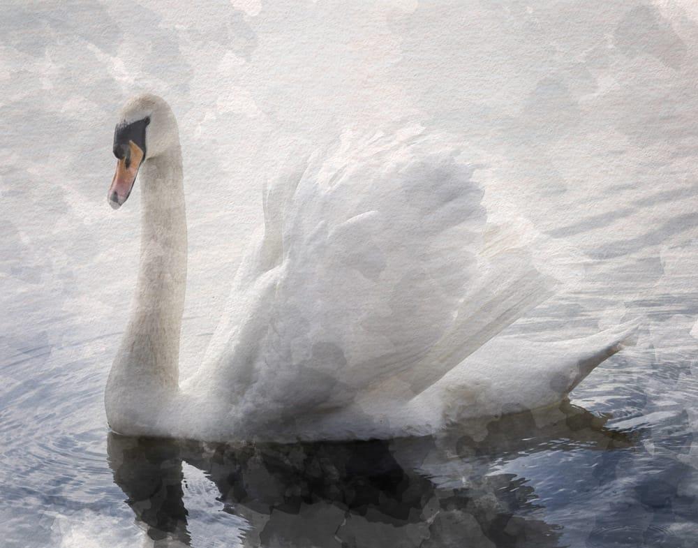 Landscape & Swan - image 1 - student project