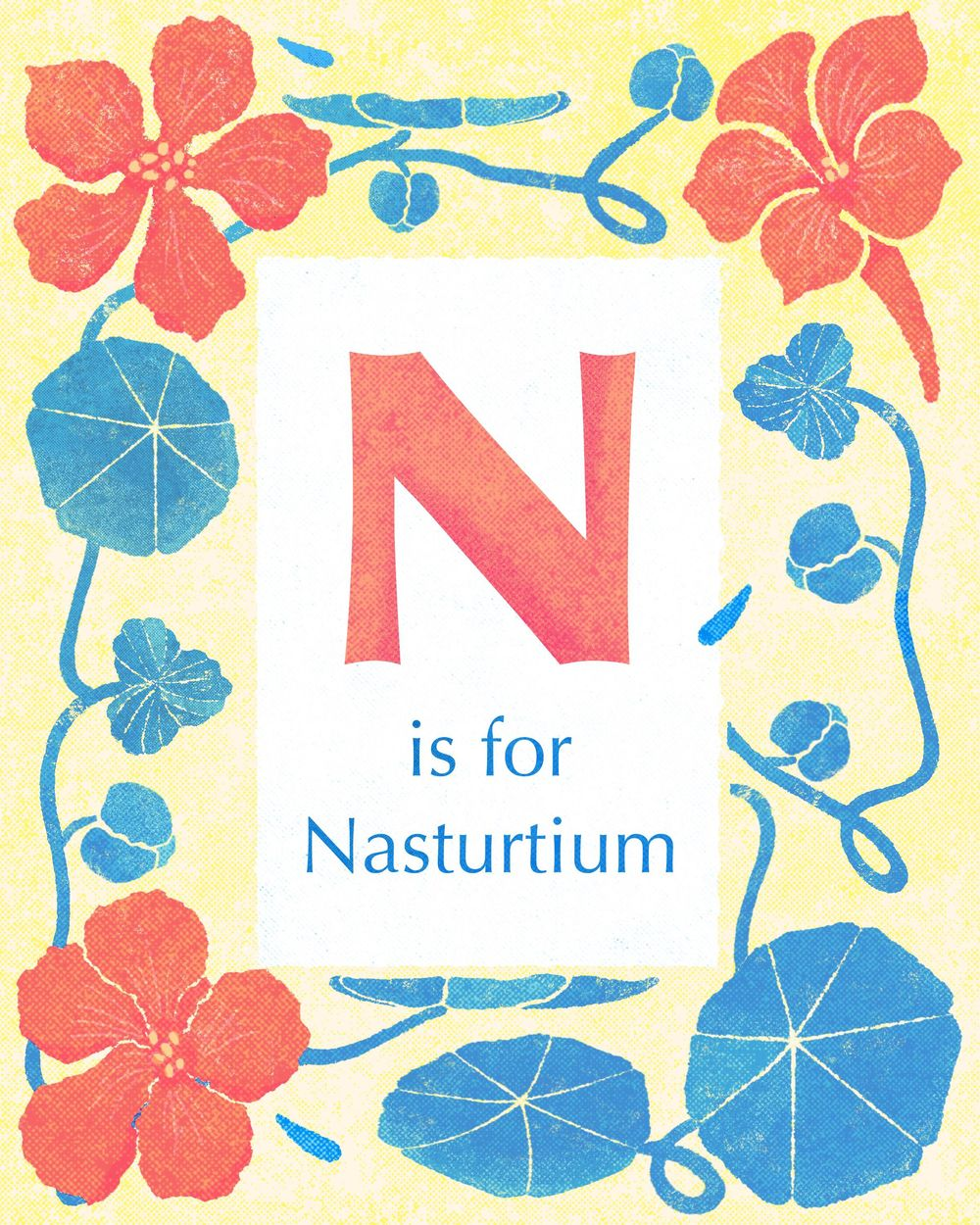 Nasturtiums (you can eat them!) - image 3 - student project