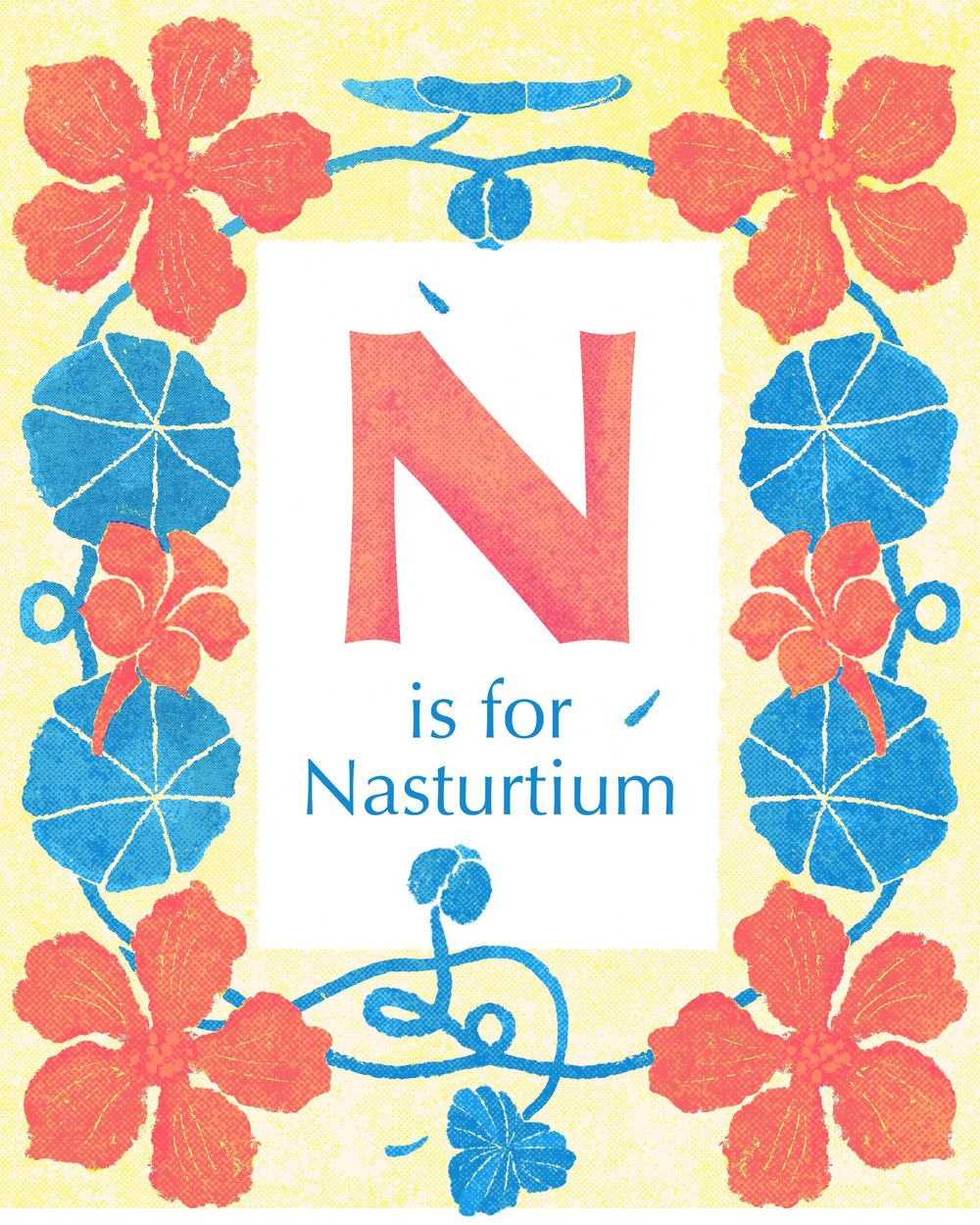 Nasturtiums (you can eat them!) - image 2 - student project