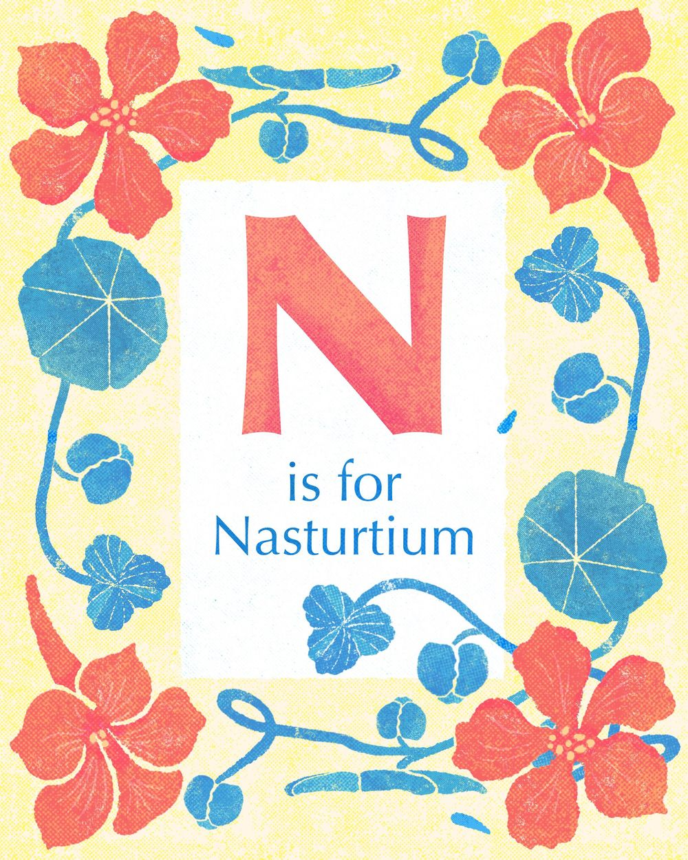 Nasturtiums (you can eat them!) - image 1 - student project