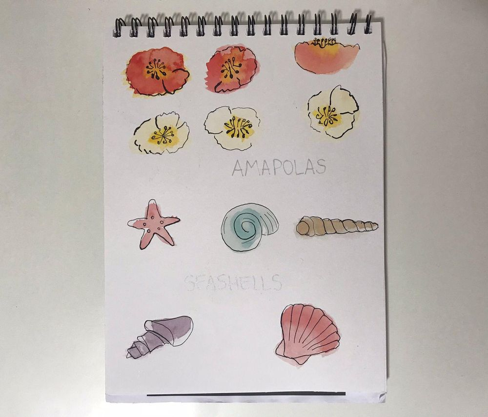 Tomatoes, pears, poppies and sea shells - image 2 - student project
