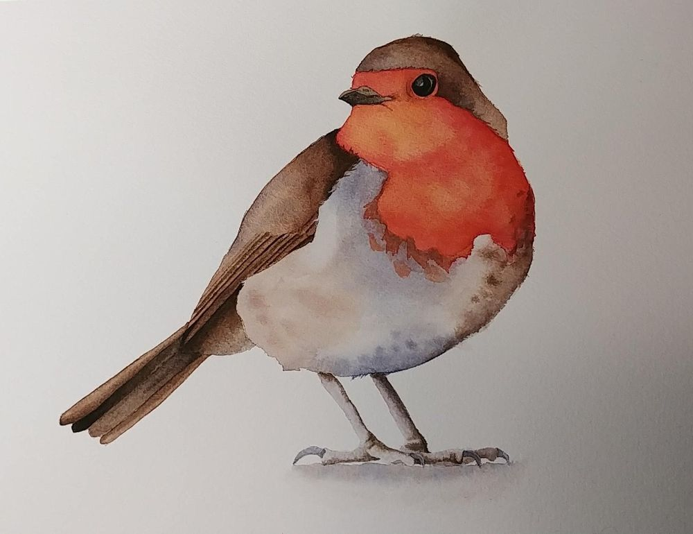 Little Robin - image 1 - student project