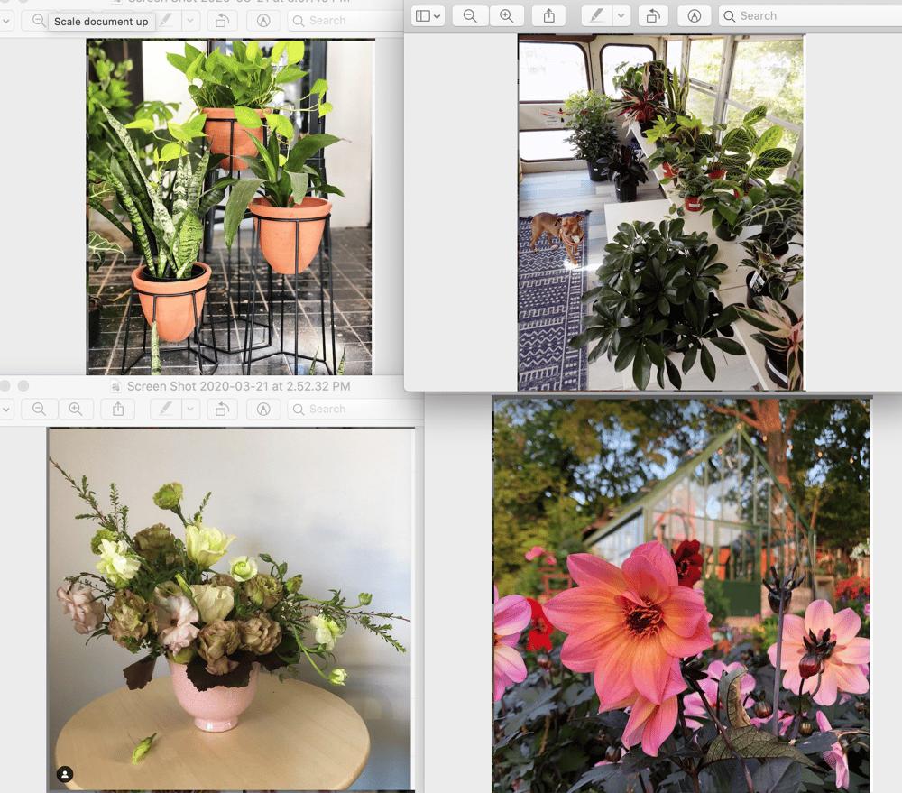 Birmingham Plant Stores - image 1 - student project