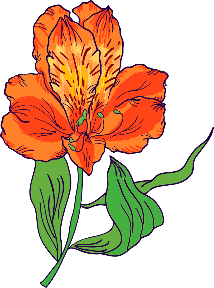 Astromelia flower - image 1 - student project