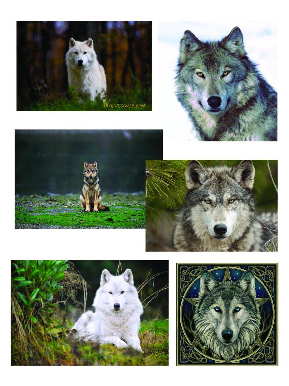 Geometric Wolf - image 1 - student project
