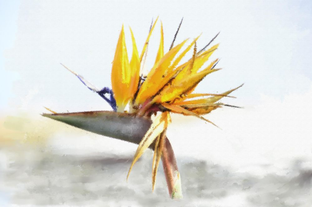 Bird of Paradise - image 2 - student project