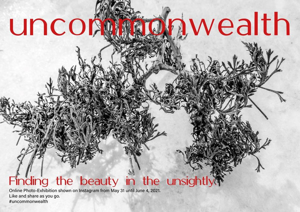 Beauty in the unsightly - image 2 - student project