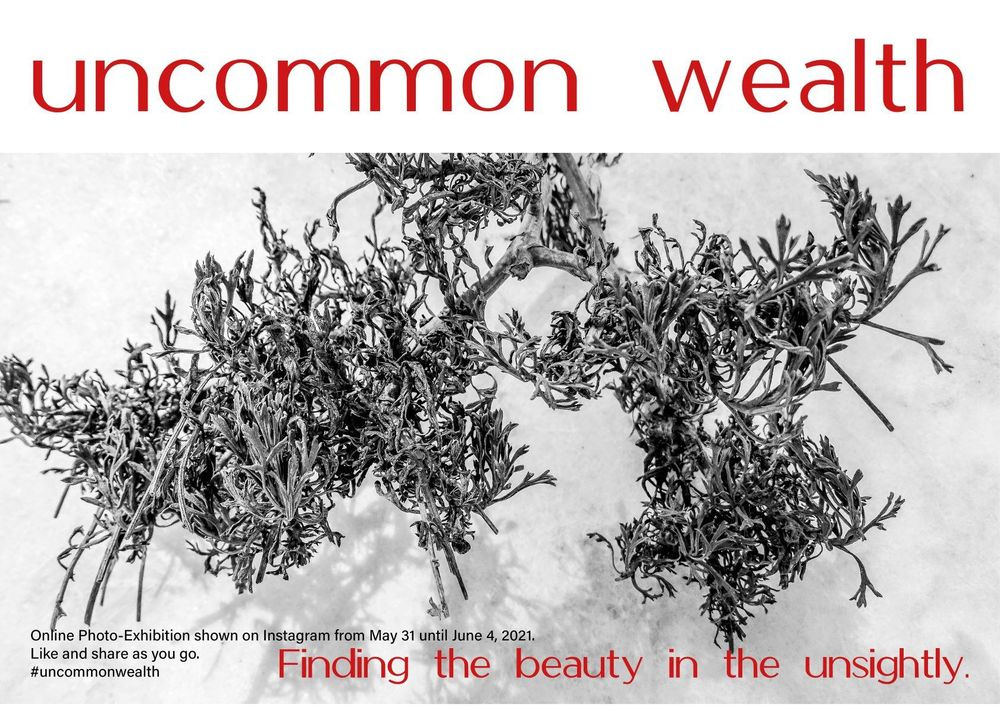 Beauty in the unsightly - image 3 - student project