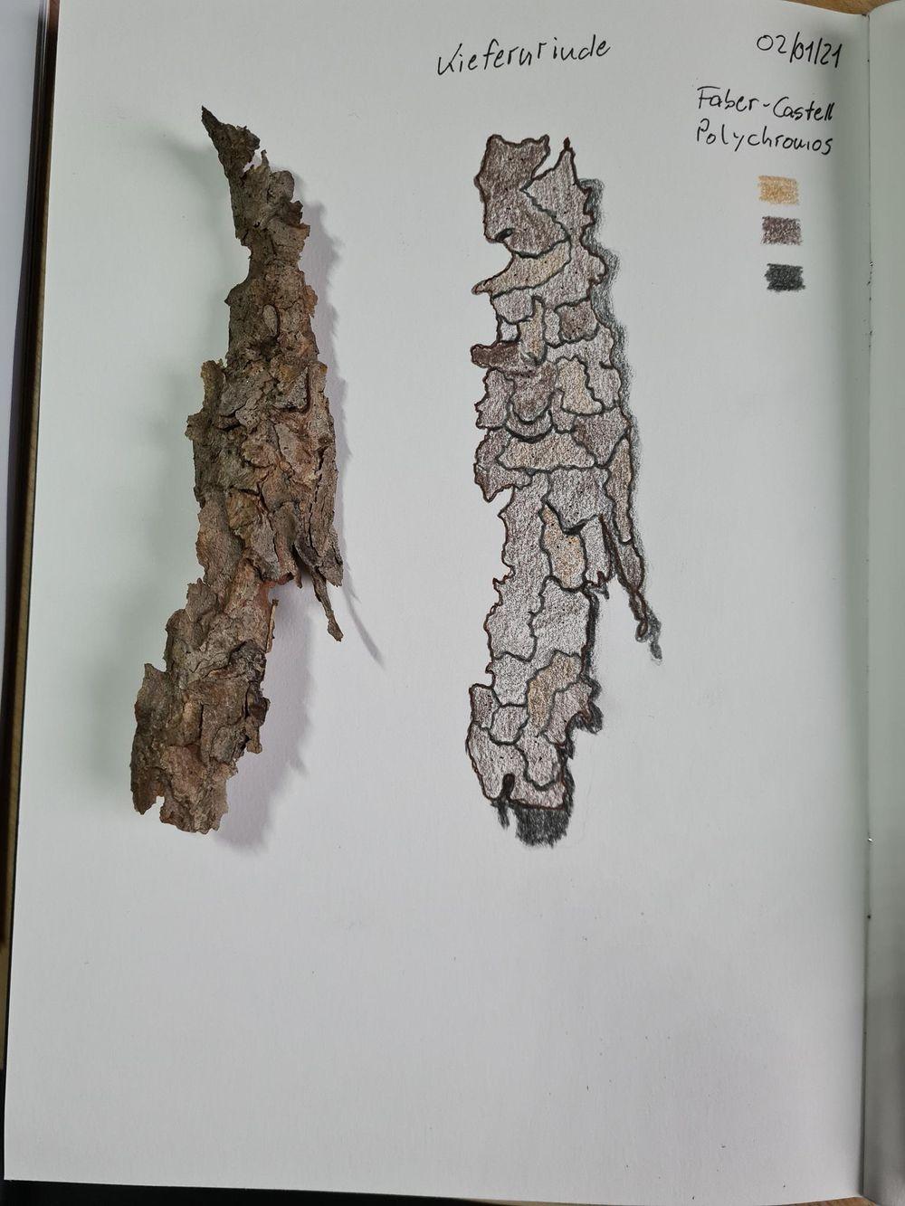 Nature Sketchbook 2021 - image 1 - student project