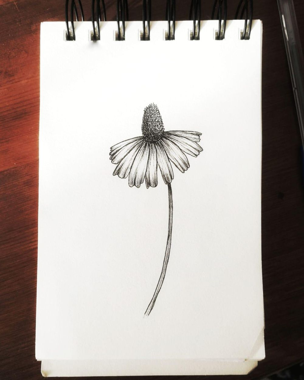 Coneflowers - image 2 - student project