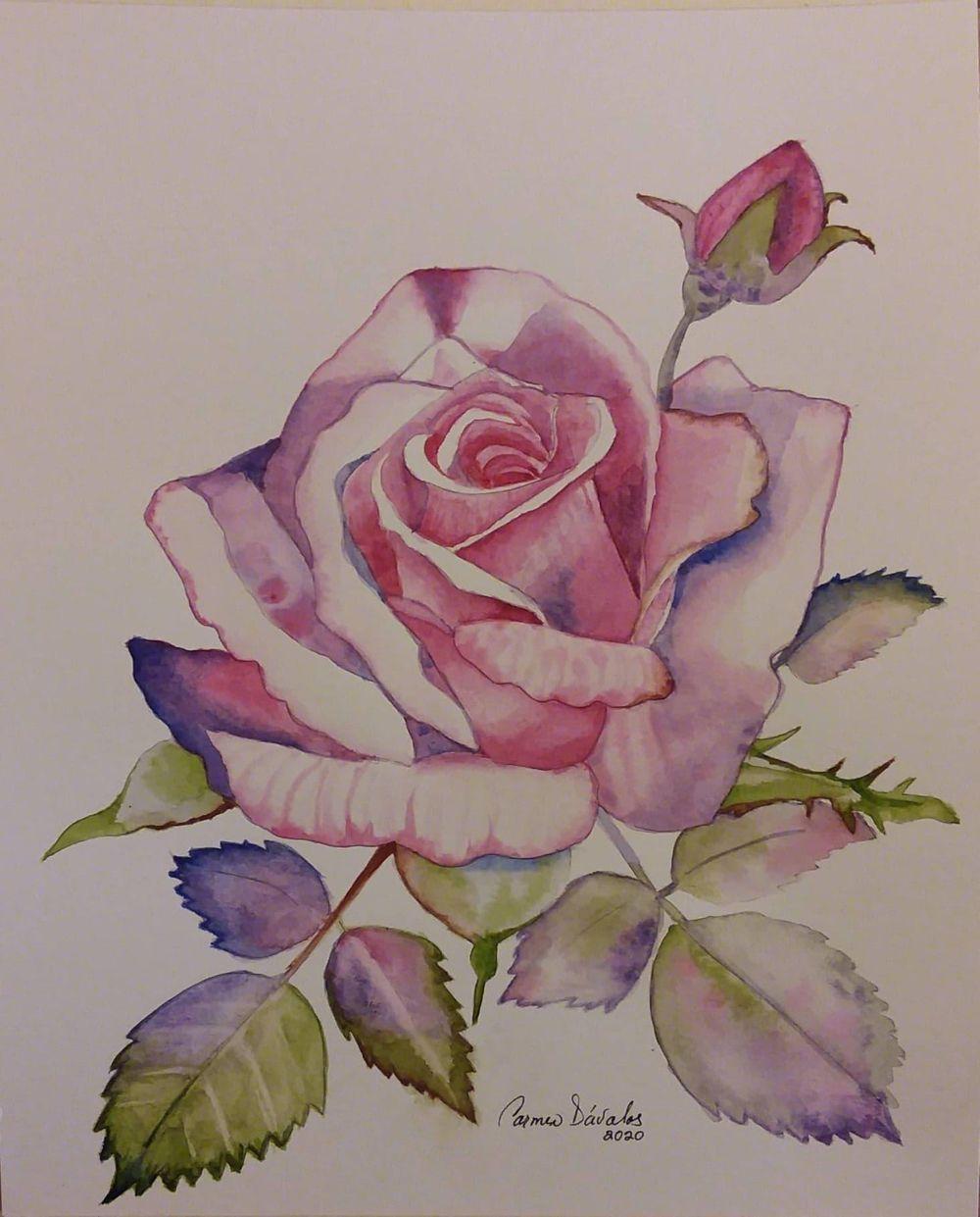 Rose. Carmen Davalos - image 1 - student project