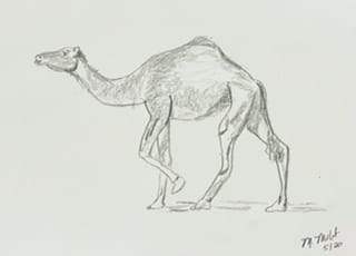 Camel. Not sure why his face looks like a horse. - image 2 - student project