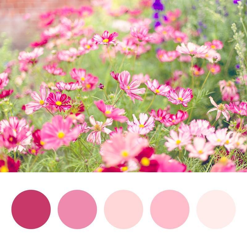 Colour Palette fun - image 2 - student project