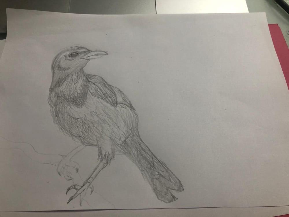 Scrub Jay finished - image 2 - student project