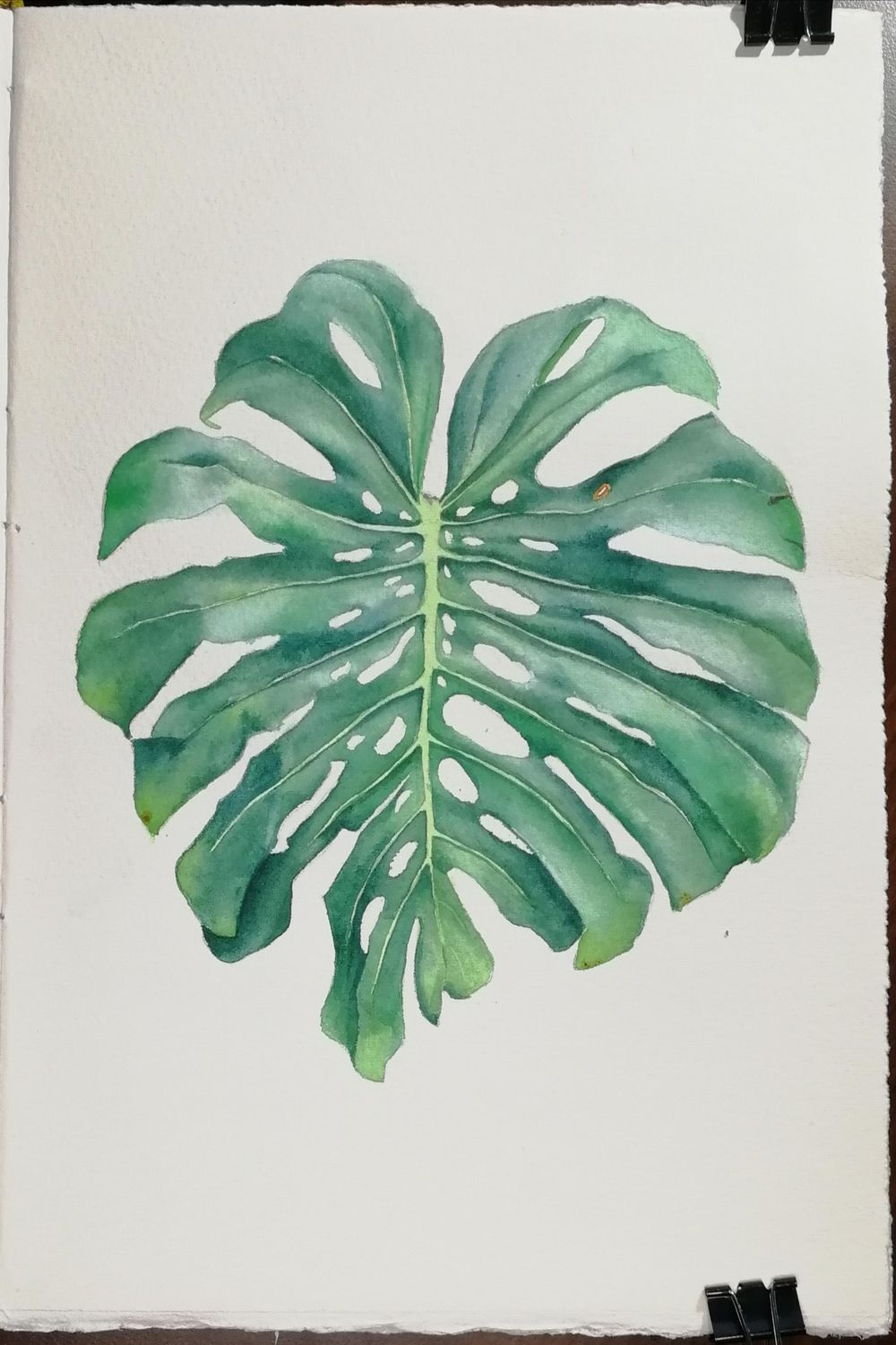 Are montsera leaves the new orchids? - image 6 - student project