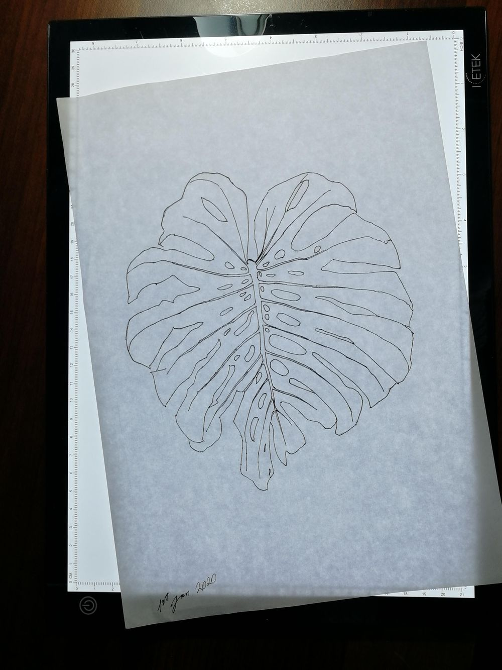 Are montsera leaves the new orchids? - image 3 - student project