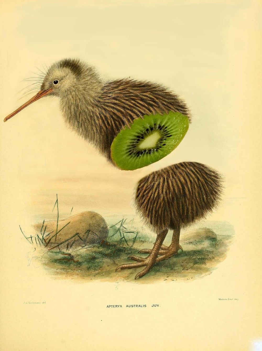 I cut a kiwi, but it was only kiwi inside... - image 1 - student project
