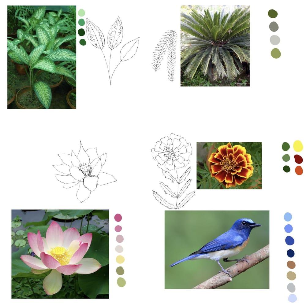 Blue flycatcher - image 1 - student project