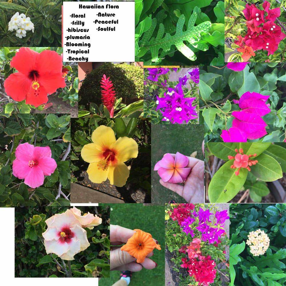 Hawaiian walks - image 7 - student project