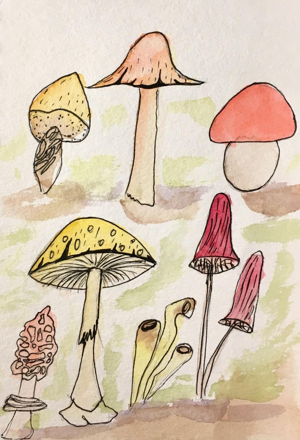 Fungi - image 2 - student project