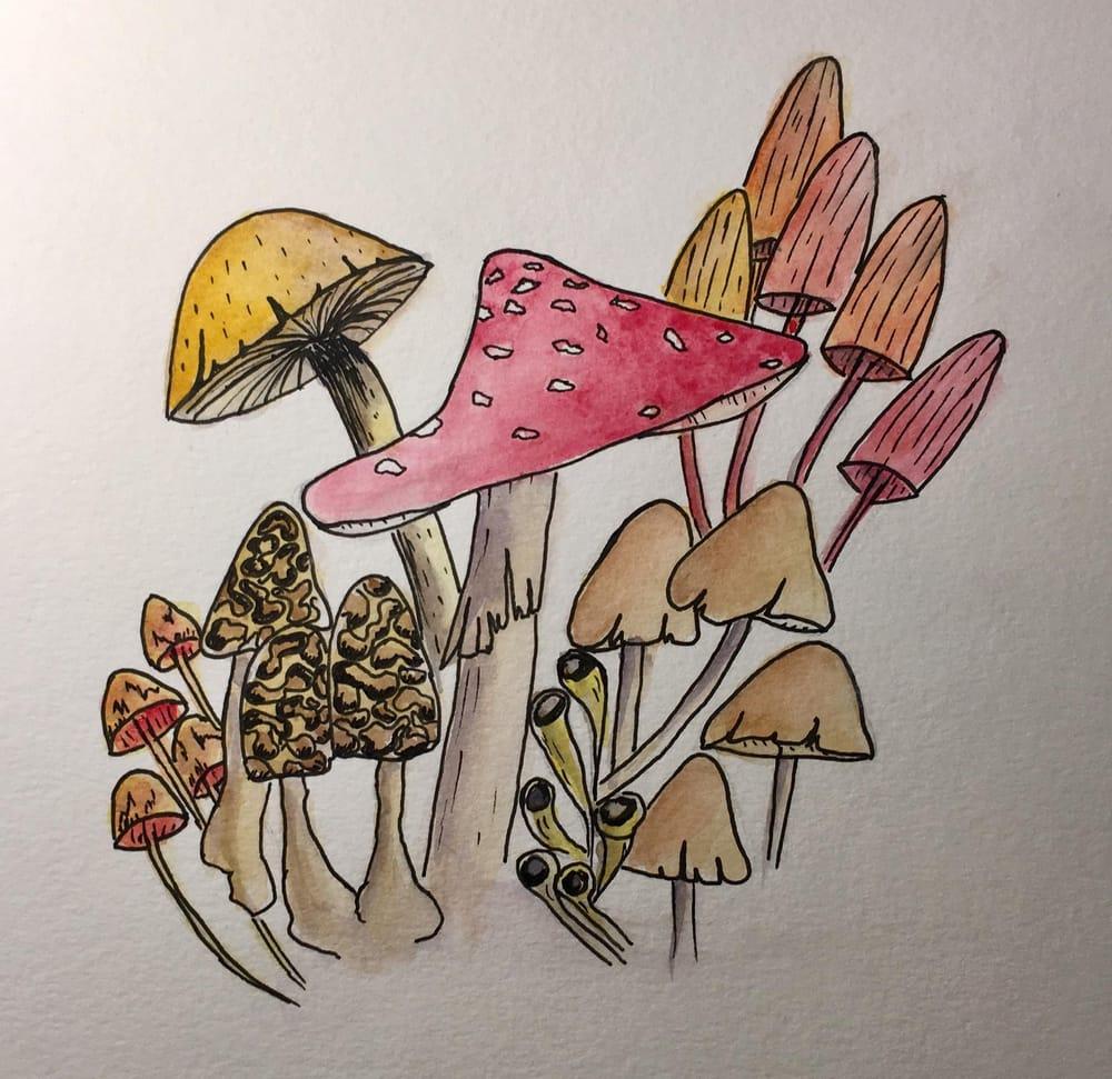 Fungi - image 3 - student project