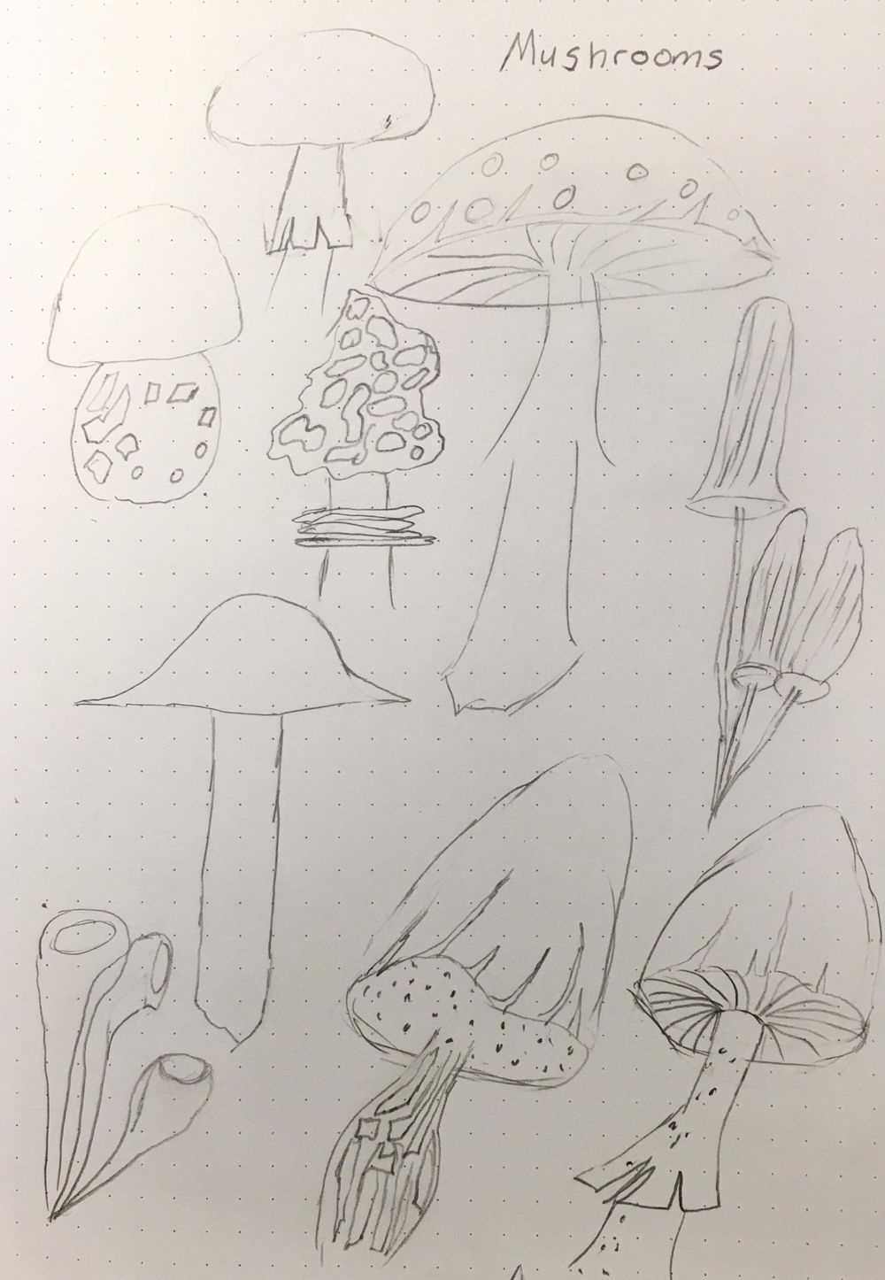 Fungi - image 1 - student project
