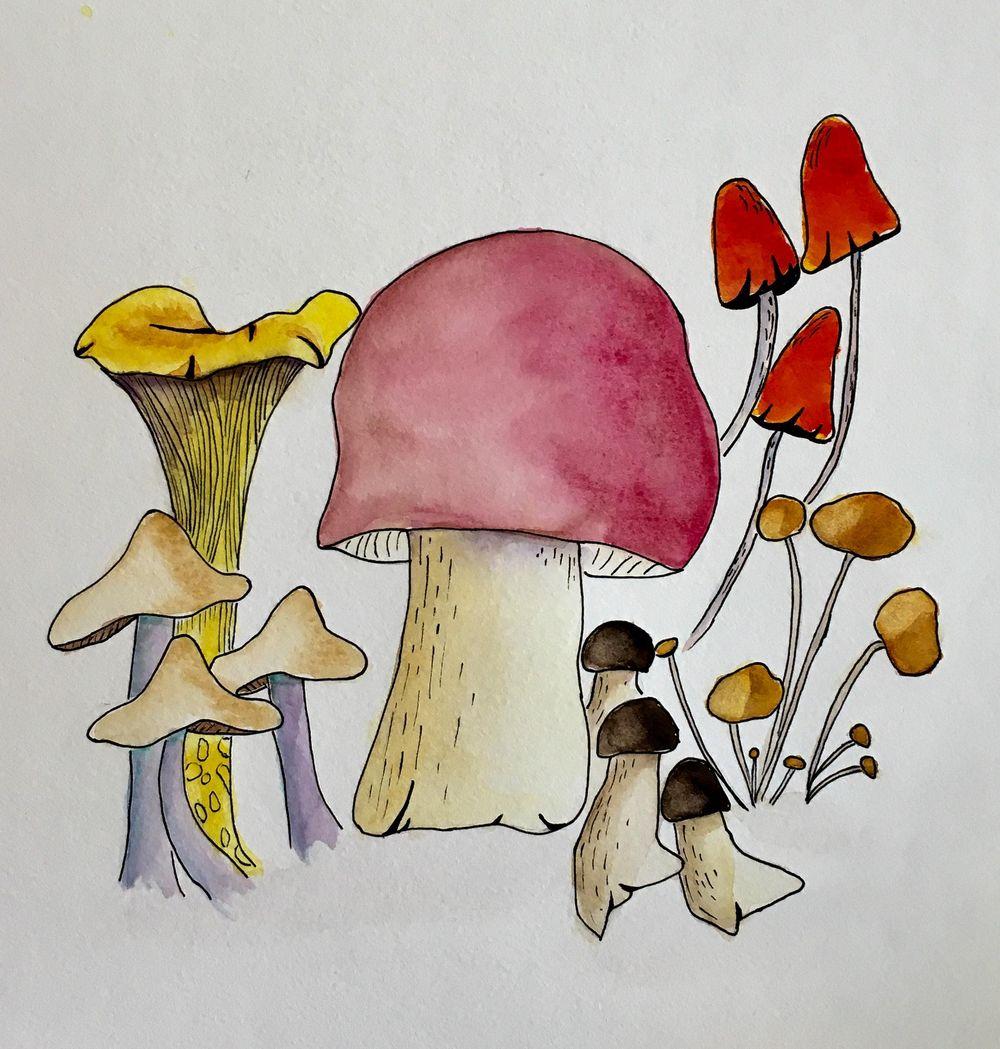 Fungi - image 4 - student project