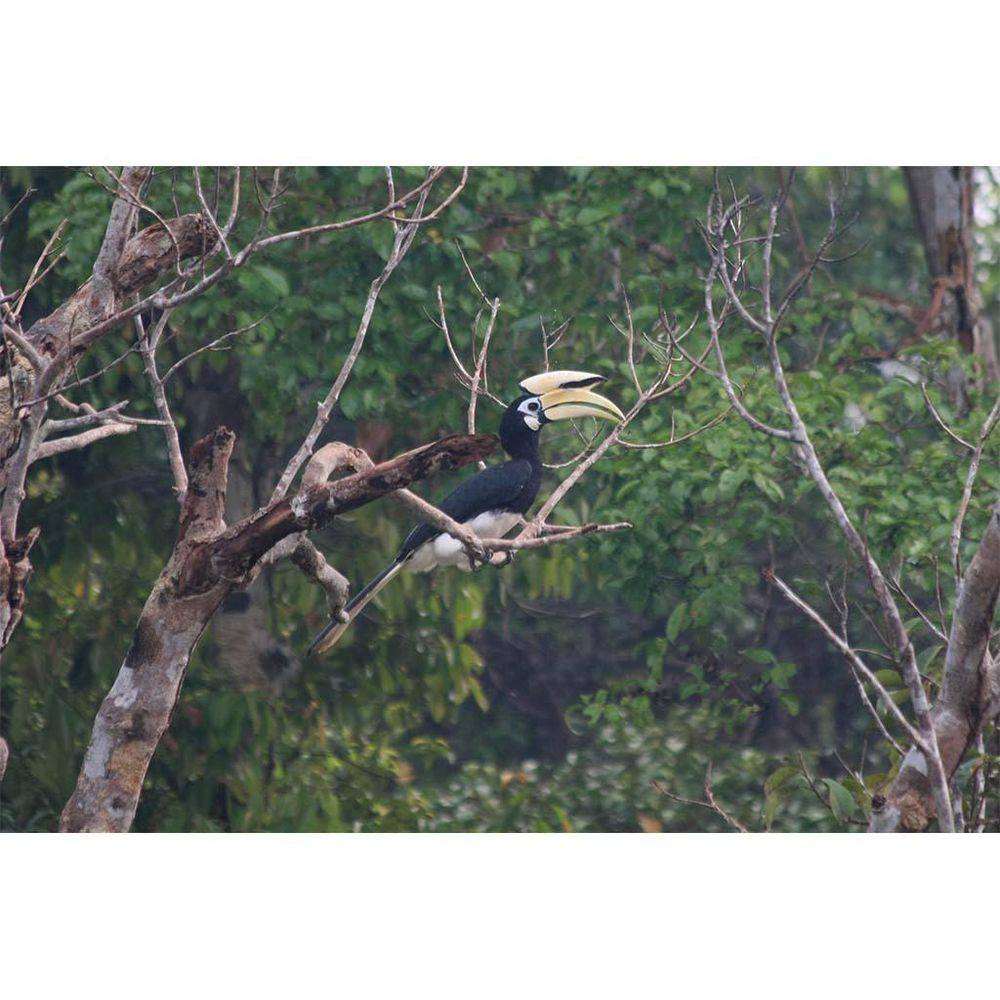 Hornbill! - image 1 - student project