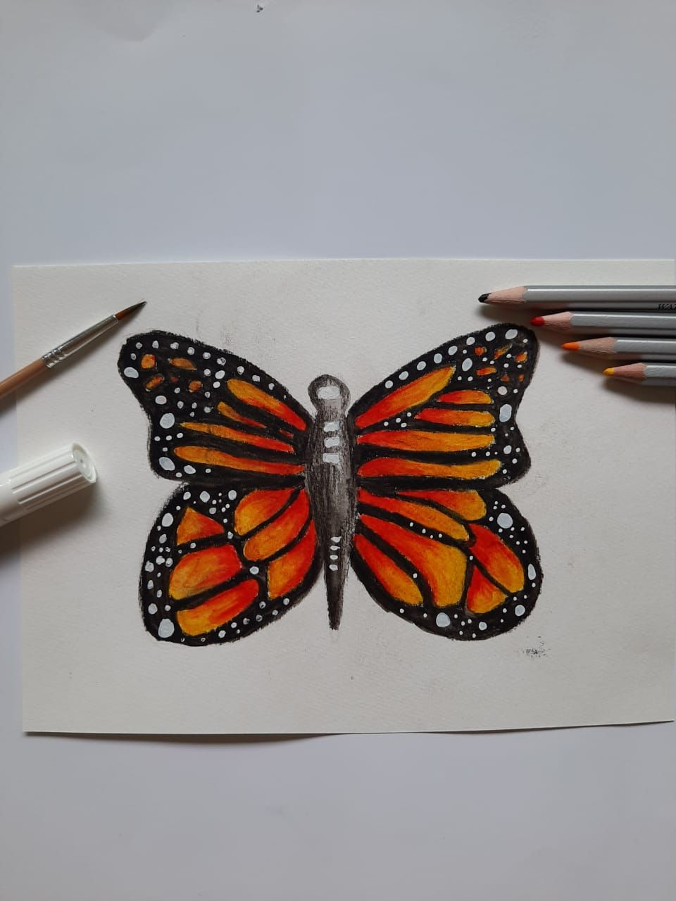 Butterfly - image 2 - student project